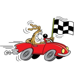 Cartoon dog in a car waving a checkered flag vector