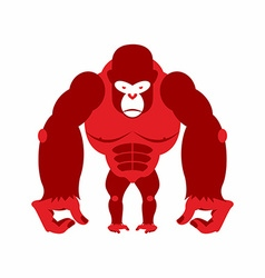 Gorilla big and scary Strong red Angry monkey vector image vector image