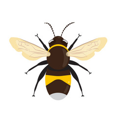 Honey bee icon vector