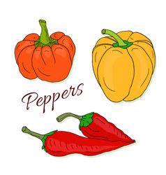 Set of hand drawn sketch peppers chili and bell vector