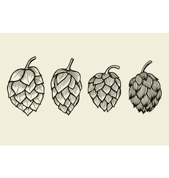 Hand drawn hops set vector