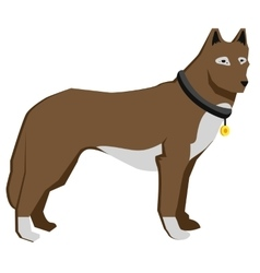 Brown dog isolaterd on white background straight vector