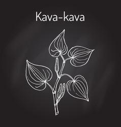 Kava-kava piper methysticum medicinal plant vector