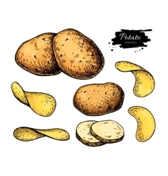 Potato drawing set isolated potatoes heap vector