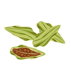 Whole and half of fresh cardamom pods vector