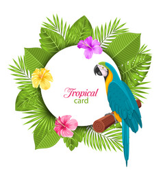 tropical card with parrot ara colorful hibiscus vector image