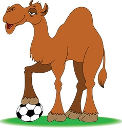 Camel with soccer ball vector