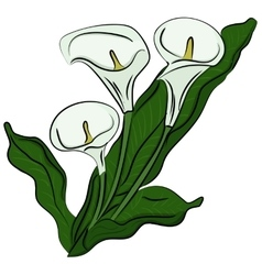 Hand drawn of a calla vector image vector image