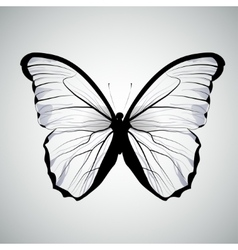 transparent butterfly isolated vector image