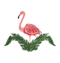 Flamingo bird icon image vector