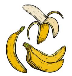 yellow banana fruit vector image vector image