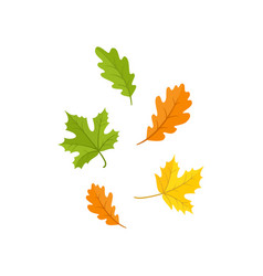 Colorful set of oak and maple fall autumn leaves vector