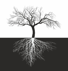 Apple tree without leaves with roots vector