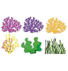 Different kind of coral reefs vector