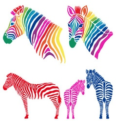 Colorful zebras set vector