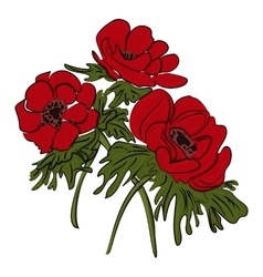 Red flower of anemone isolated vector