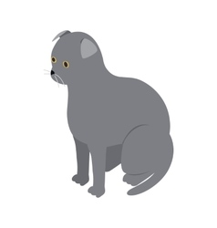 Scottish fold cat icon isometric 3d style vector