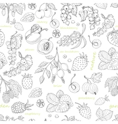 seamless pattern with berries on a white vector image