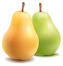 fresh pears one on white background vector image
