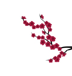 red flower branch vector image vector image