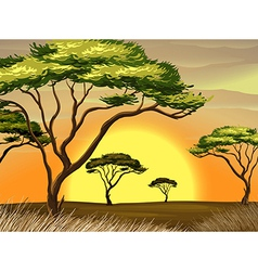 A sunset view at the forest vector image