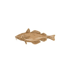 Atlantic cod codling fish drawing vector