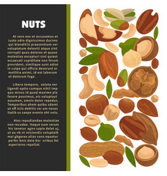 nuts organic nutrition and raw diet information vector image vector image