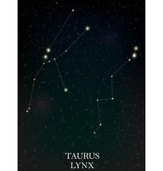 Taurus and lynx constellation vector