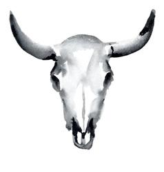 cow skull vector image