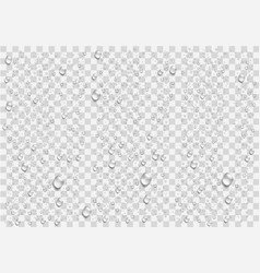 realistic water droplets on the transparent vector image vector image