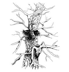 Sketch of tree Bird in house Old poplar tree vector image