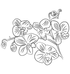 flowers with bud outline sketch vector image vector image