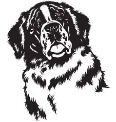 head of saint bernard black white vector image