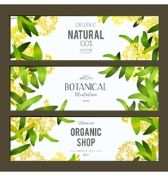 Plants and herbs banners set vector