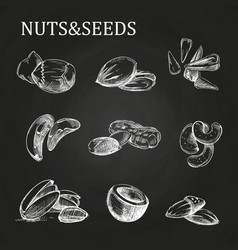 Nuts and seeds sketch on chalkboard vector