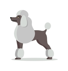 Poodle in Stand on White Background vector image