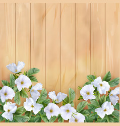 background with white flowers vector image
