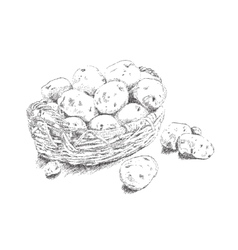 Dots stipple potatoes in a basket vector