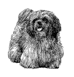 Lhasa apso 01 vector