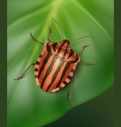 Striped shield bug vector