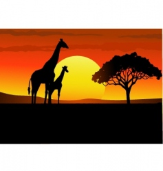 Africa giraffe sunset vector