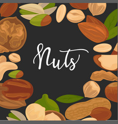 Delicious nutritious nuts advertisement banner vector