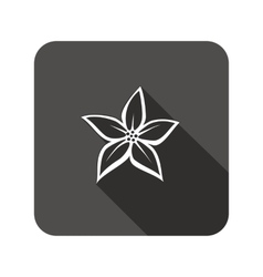 Lily flower icons Floral symbol Rounded square vector image vector image