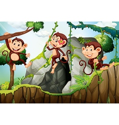 Three monkeys hanging on the branch vector