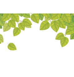 Green leaves isolated vector