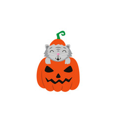 Flat cat sitting at big scary pumpkin vector