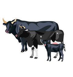 cow calf and bull isolated vector image vector image
