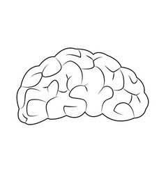 Human brain for medical health design vector