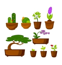 Pots plants with flowers and leaves set vector