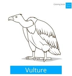 Vulture bird learn birds coloring book vector